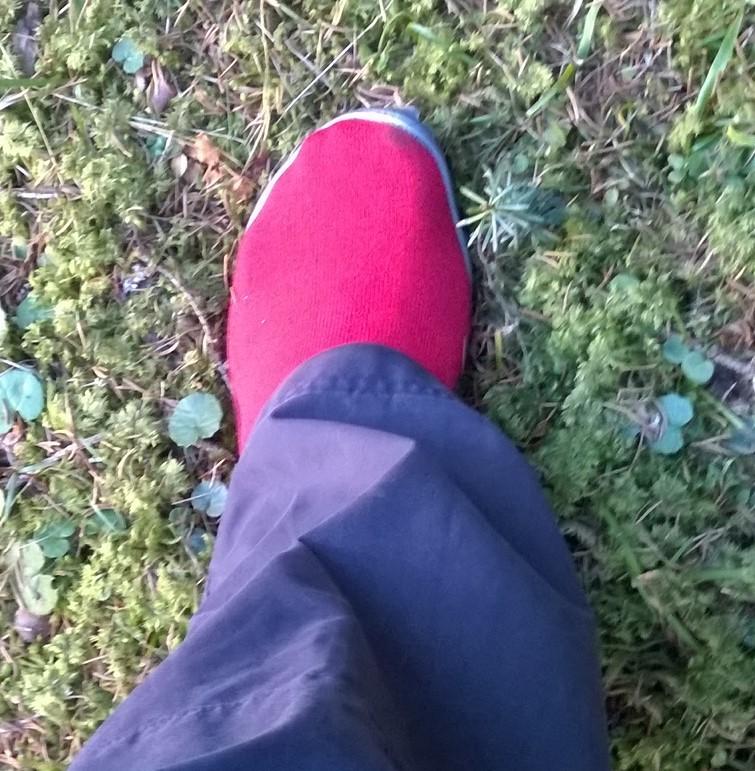 Waldboden im Lammertal mit dem leguano® classic rot.