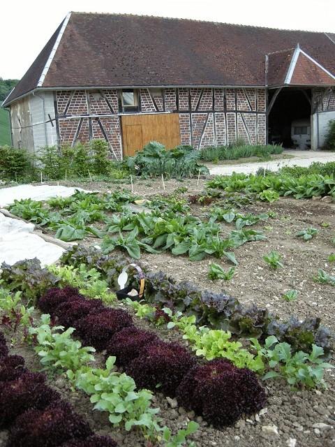 légumes dans le jardin