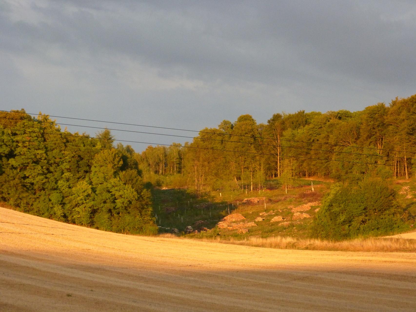coucher de soleil sur la forêt en exploitation automne 2015