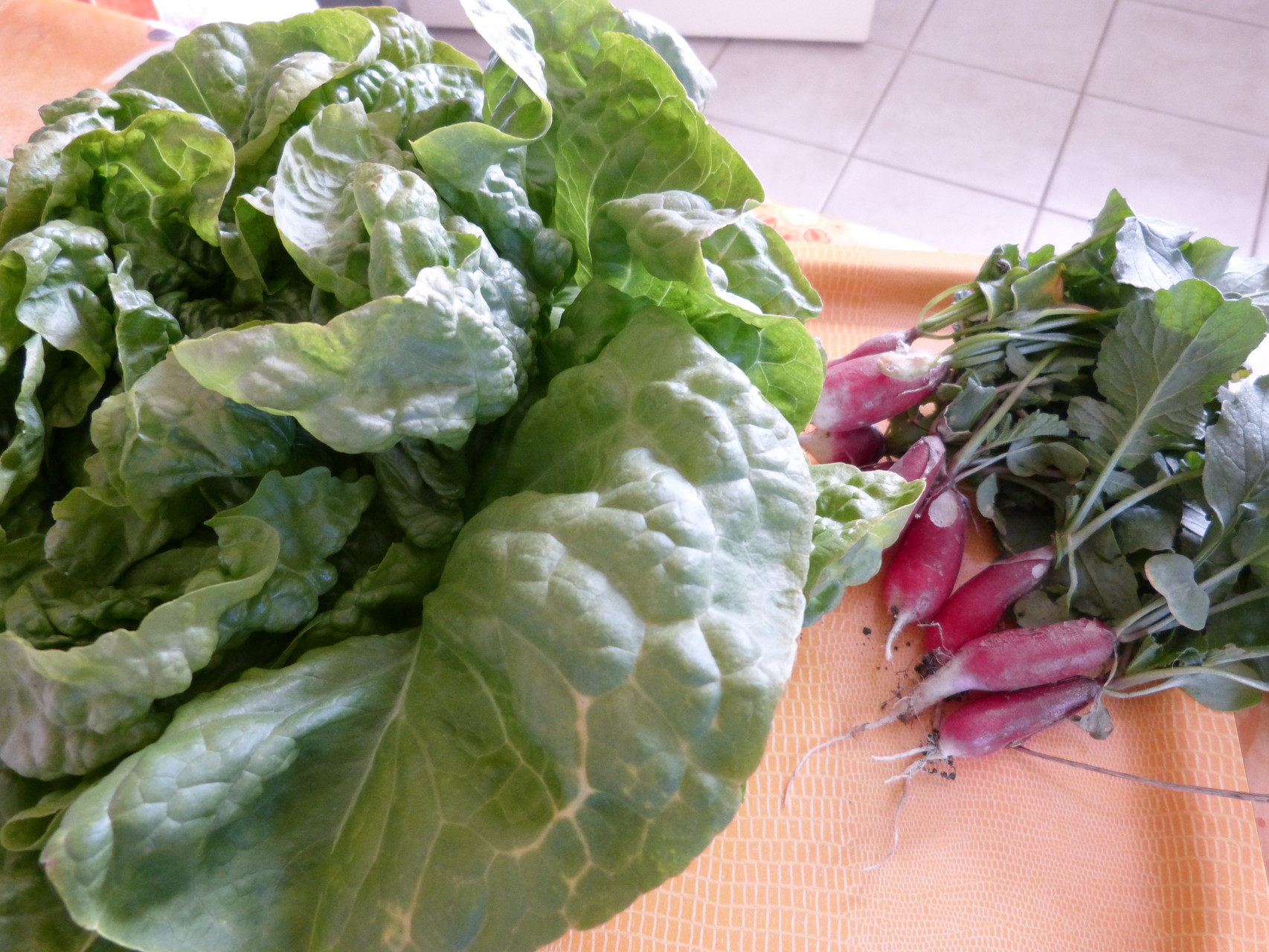 salade et radis à préparer printemps 2015