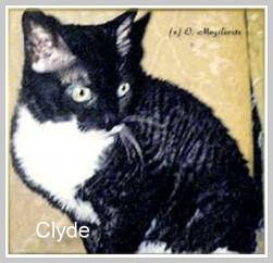 Clyde; URX