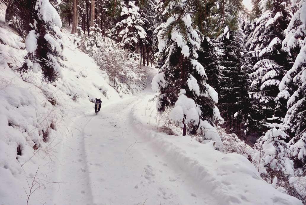 Lucki beim Wintersport