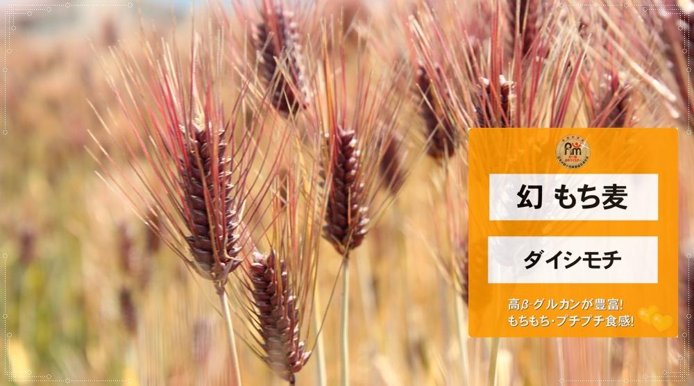 幻もち麦|ダイシモチ(愛媛県東温市産100%|生産者:牧秀宣さんの幻もち麦)