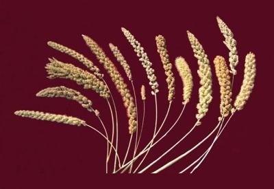 雑穀 (国内産)