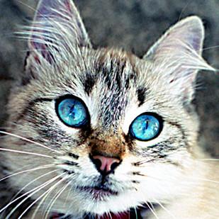© Blue eyes