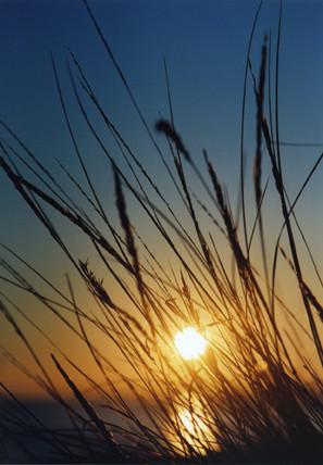 © Coucher de soleil aux oyats