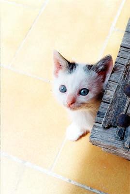 © De beaux yeux bleus