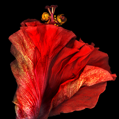 © Flamenco