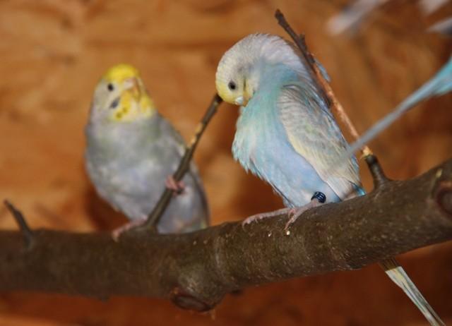 Pearl und Angel im neuen Schutzhaus