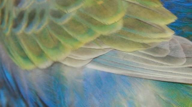 Jack's Flügel