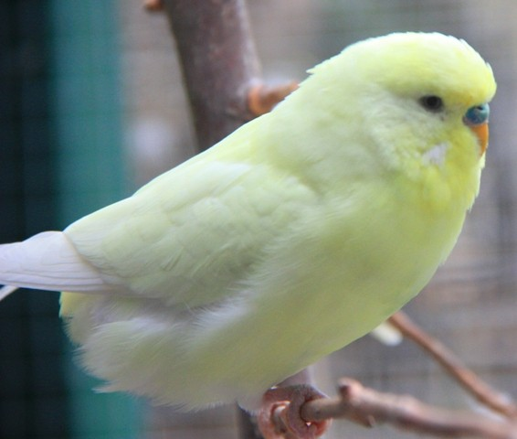 Lemon im März 2014