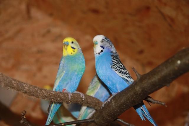 Otto und Blue