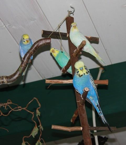 Otto, Mia, Pearl und Hurakan