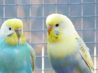 Eltern von Bonnie - Foto von Franz Starovasnik