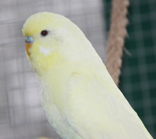 Lemon Anfang Dezember 2012