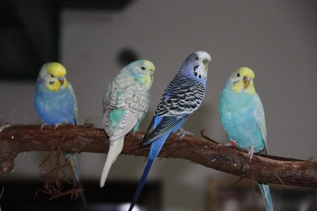 Otto, Lola, Blue und Mia