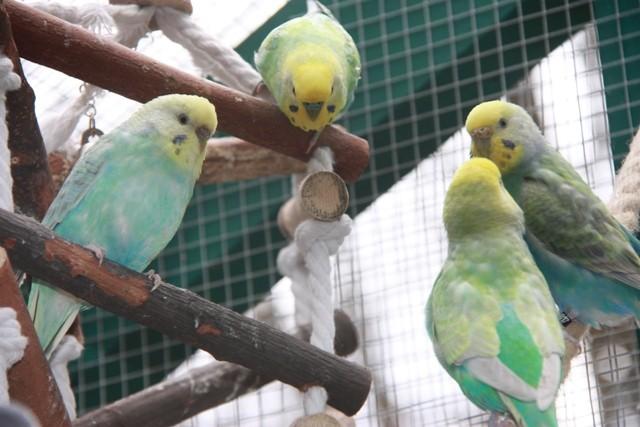 2 Paare - Sweety, Bounty und Dave mit Joan