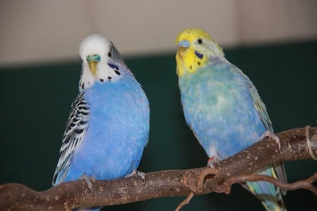 Blue und Otto Jänner 2011