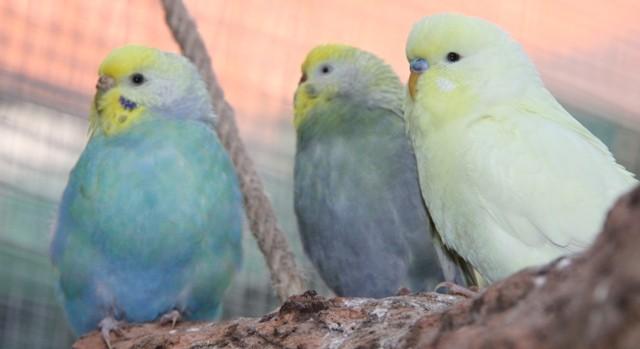Violet, Pearl und Lemon am 11.1.2013