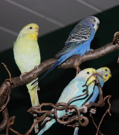 Pearl, Blue, Mia und Otto