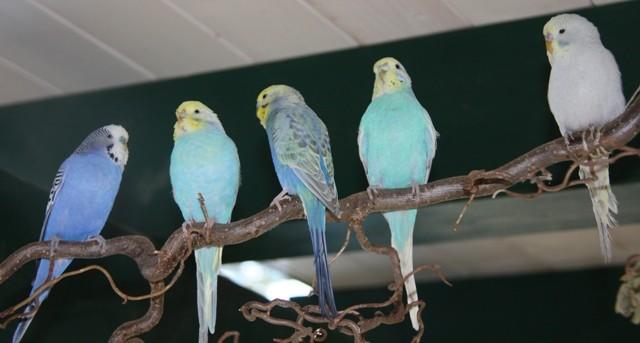 Blue, Mia, Otto, Lola und Earl
