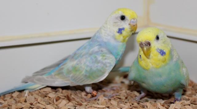 Luise und Thelma im Quarantänekäfig
