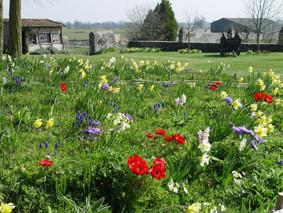 le jardin de mille fleurs au château-fort médiéval de Tennessus