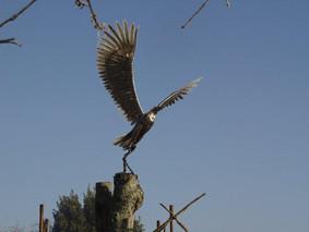 l'aigle s'envole au chateau-fort féodal de Tennessus