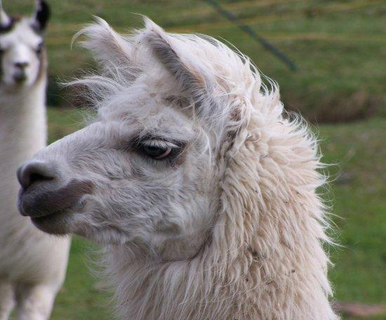 Langes Wochenend-Retreat inklusive Lama Wanderung 13.05.21 - 16.05.21