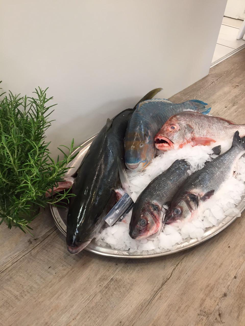 frisch - frischer - Frischfisch