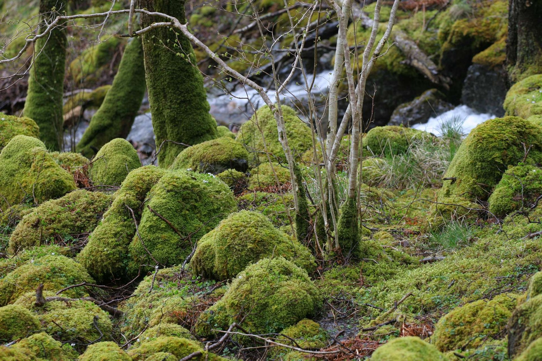 Glen Nevis, Highlands