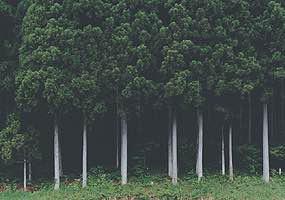 森のイメージ写真