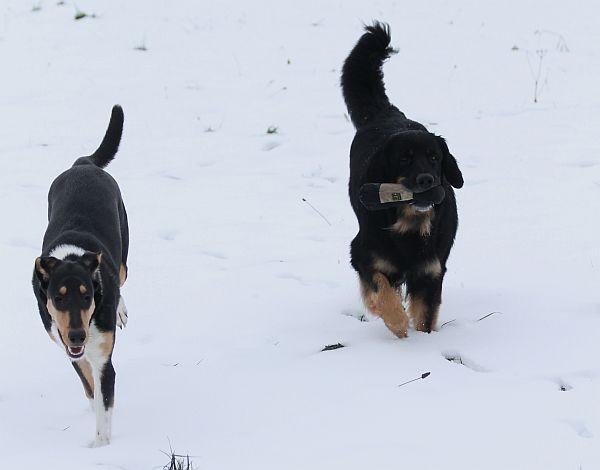 Auch Aki genoß den Schnee