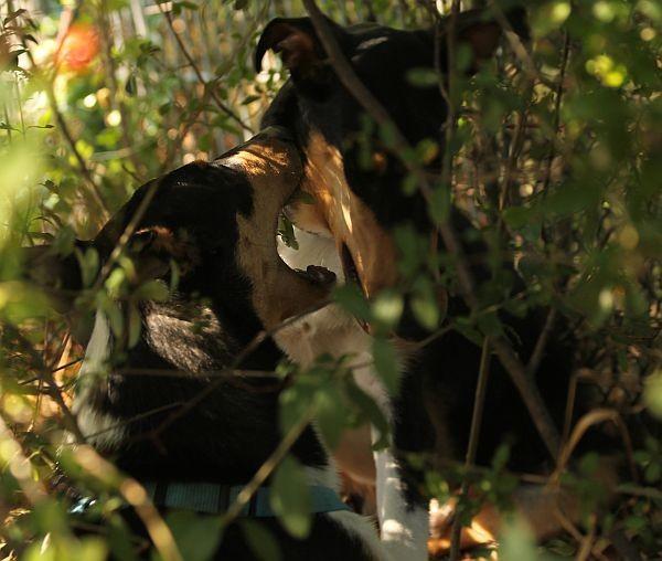 Irgendwann sah man sie nur noch in den Büschen.