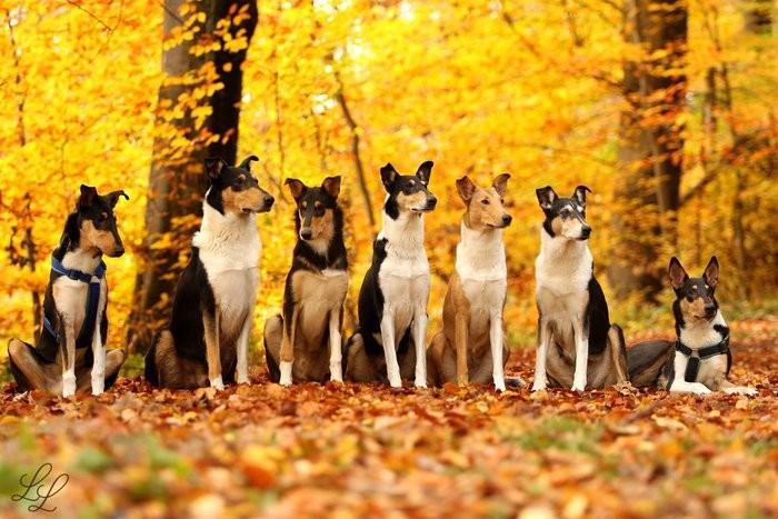 Tesla, Finn, Felan,Maja, Biene, Emily und Tonic ( Foto von L.Längsfeld )