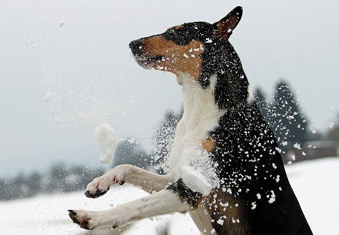 Fang den Schneeball