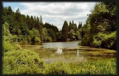 einfach ein idylisches Plätzchen (Teich im Naturpark bei Solling/Hellental)