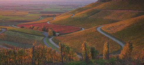 Typische Landschaft nahe der Mainschleife