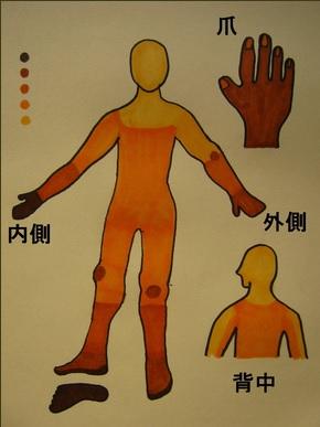 茶色の部分は濃く染まる部位、黄色の部分が染まりが薄い部位です。