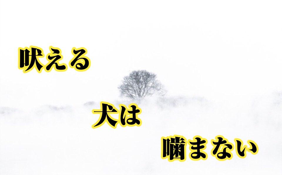 【四柱推命心理】吠える犬は噛まない | 世田谷区の占い師昭晴