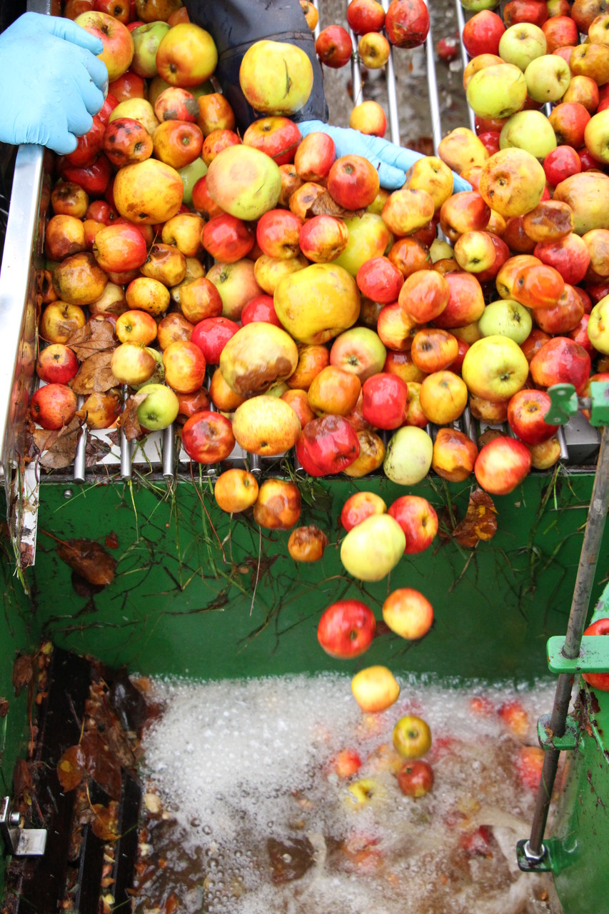 Etape 3: Le Brassage- Triage & lavage des pommes.