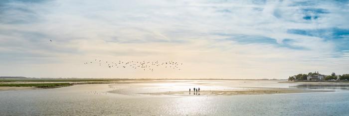 Les meilleurs endroits pour observer les phoques en baie de somme