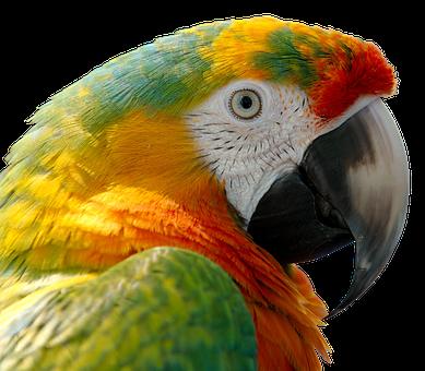 Papagei, Bild steht in keinem Zusammenhang mit Hempage