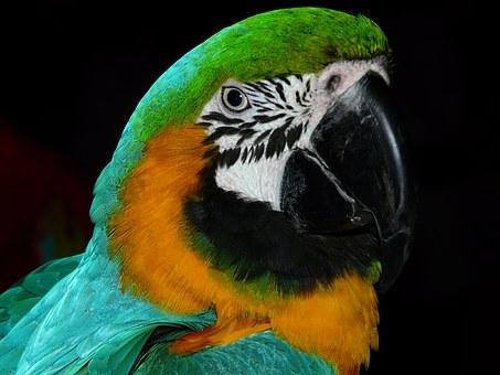 Papagei, Bild steht in keinem Zusammenhang mit Lebenskleidung