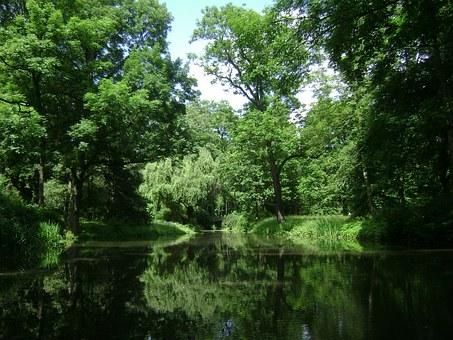 Wald in Polen
