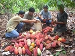 Kakao-Kooperative ACOPAGRO