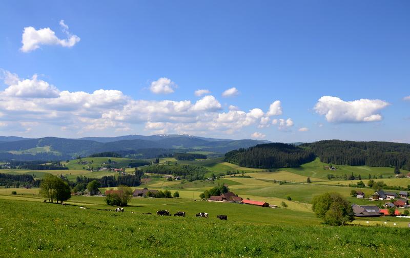 Breitnau - im Hintergrund der Feldberg