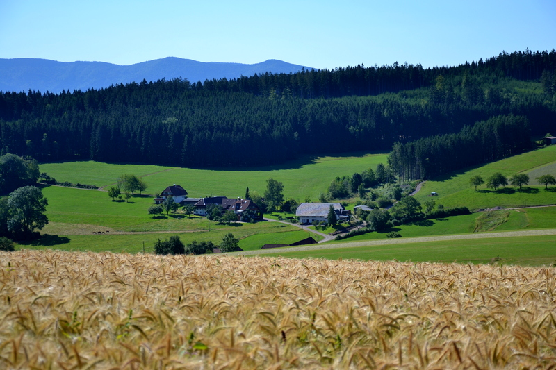 Bauernhof bei Biederbach (Obertal)