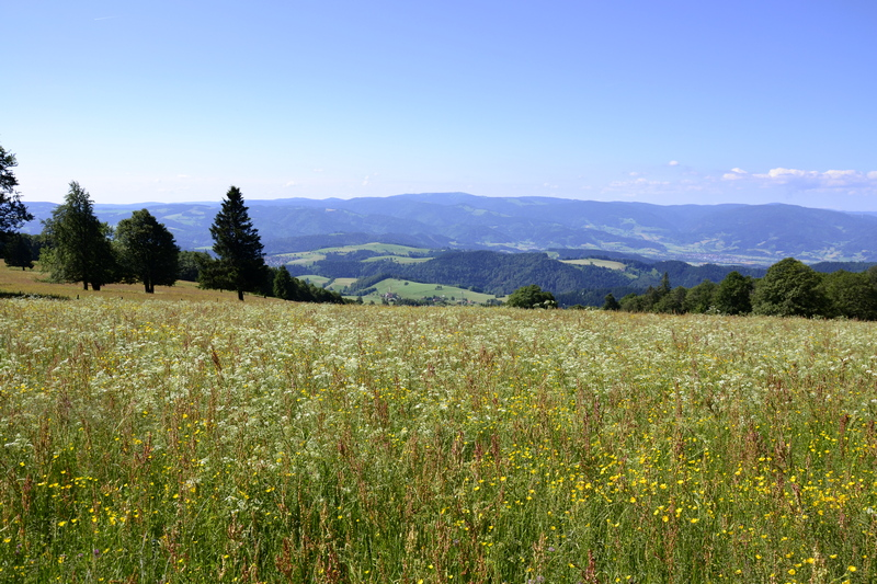 Frühlingswiese - Kandel