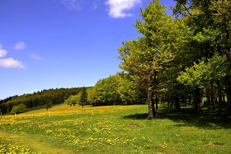 Frühling auf dem Kandel